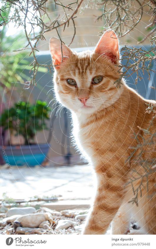 Kleiner Löwe Katze Natur Pflanze Tier Tierjunges Garten niedlich Fell Haustier Fürsorge Katzenbaby