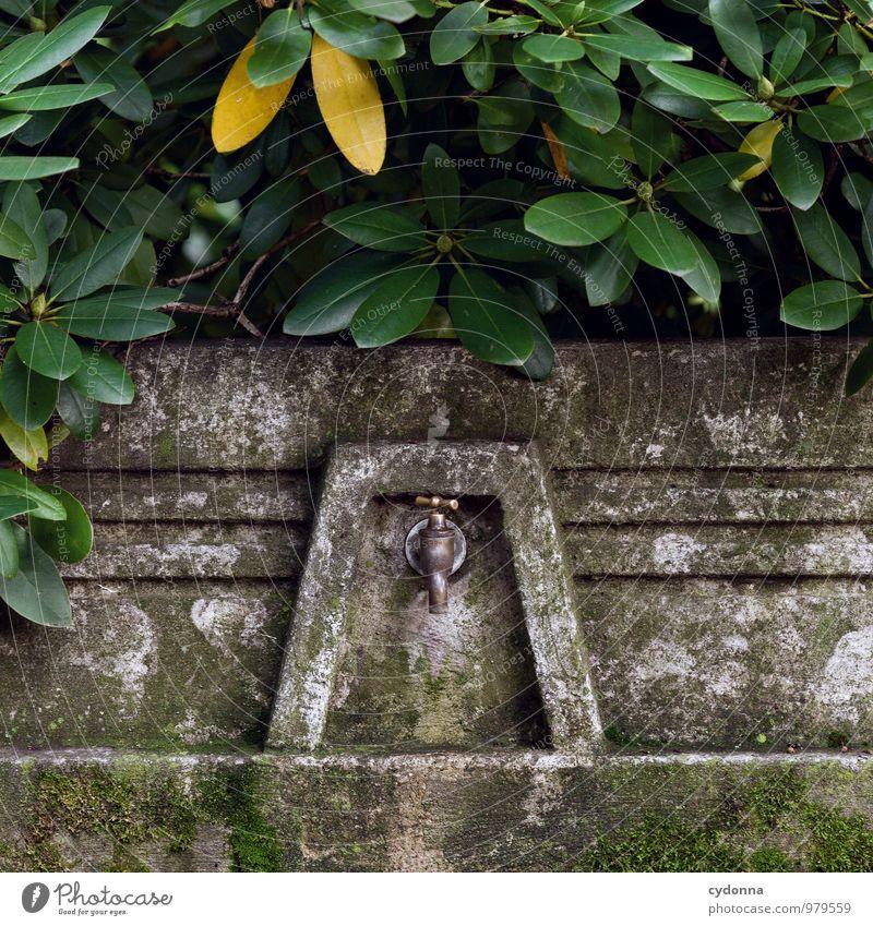 Bewässern Natur Wasser Einsamkeit Blatt ruhig Leben Gesundheit träumen Design Idylle Sträucher ästhetisch Beginn Vergänglichkeit Ewigkeit Hilfsbereitschaft