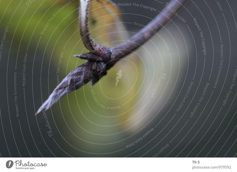 Blatt Umwelt Natur Pflanze Herbst Blühend verblüht ästhetisch authentisch einfach elegant natürlich wild Gelassenheit geduldig ruhig einzigartig Geäst schön
