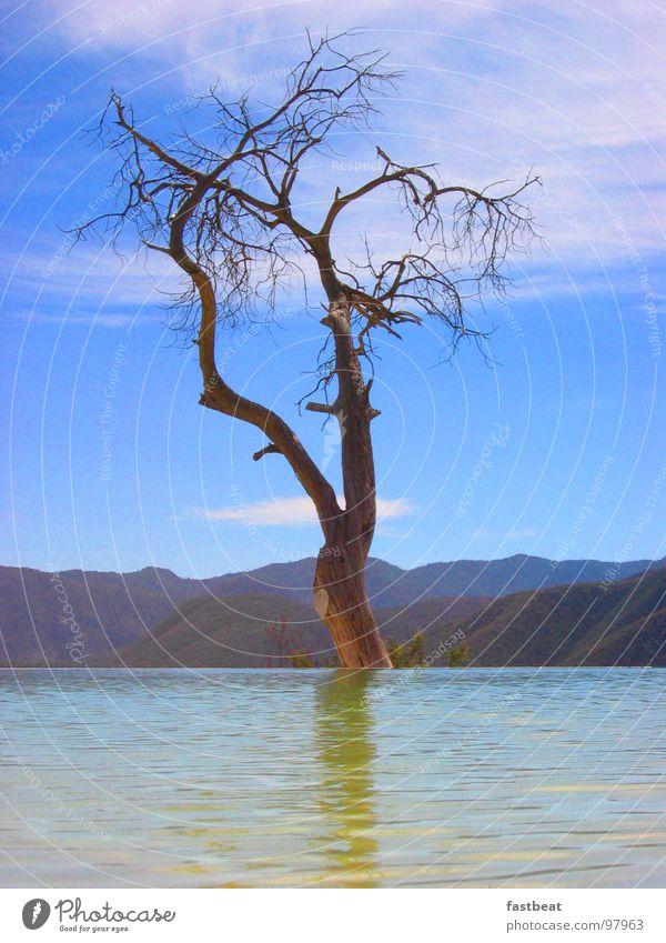 floating tree Wasser Baum Freude Hoffnung Schweben Mexiko