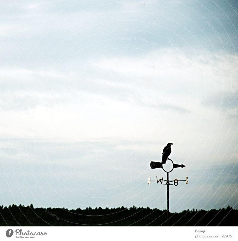 drei Himmelsrichtungen NNW Himmel ruhig Wald Wind Wetter Schilder & Markierungen Kommunizieren Ziel Klima Sturm Pfeil Zeichen Richtung Wachsamkeit Osten ziehen