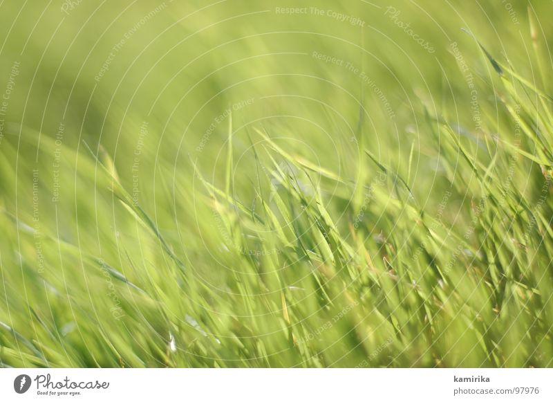 halmare grün Gras Halm Meer Sommer Frühling springen Teppich frisch sanft
