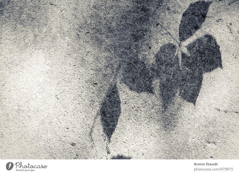 Blätterschatten Natur Blatt Mauer Wand ästhetisch authentisch dunkel einfach hell natürlich grau schwarz Stimmung ruhig Hoffnung träumen Tod Sehnsucht Senior