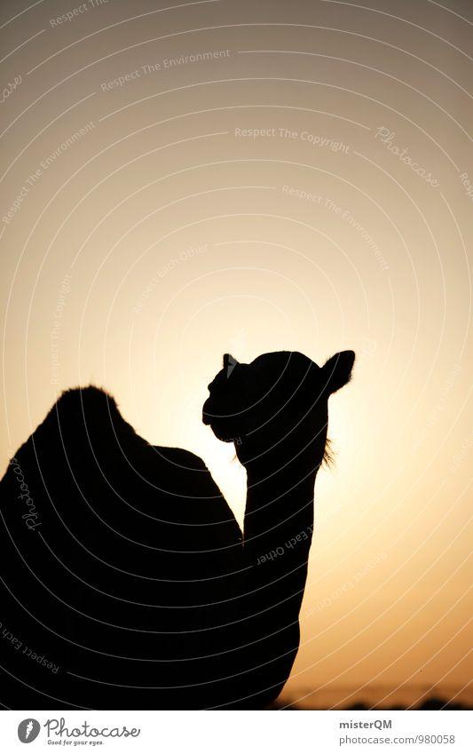 Desert Cab V Sommer Sonne Wärme Kunst Zufriedenheit ästhetisch Wüste heiß Sommerurlaub Kamel Sahara Kamelhöcker Abu Dhabi Kamelmarkt Kamelkopf