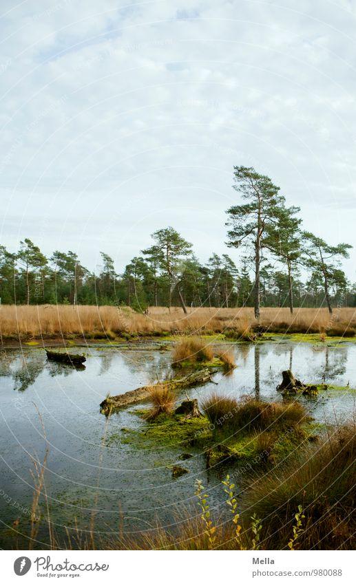 Sonntagsmoor Umwelt Natur Landschaft Pflanze Urelemente Wasser Baum Moor Sumpf Teich nachhaltig natürlich Einsamkeit Idylle ruhig Vergänglichkeit Totholz Kiefer
