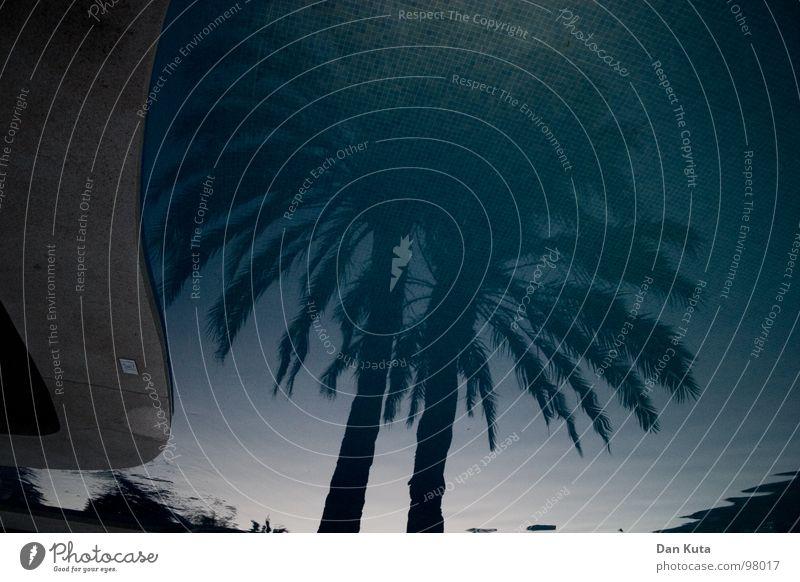 Seerose Schwimmbad Reflexion & Spiegelung dunkel Palme Süden Ferien & Urlaub & Reisen Mallorca Beton Am Rand stehen genießen Nacht Wellen Sonnenuntergang Sommer