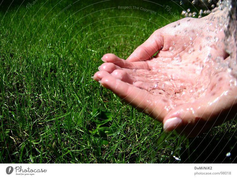 Kleine Erfrischung! Gras Wassertropfen schön Hand Fingernagel Halm Wiese Wasserschwall Sonne Kannen Gießkanne grün Natur Garten Park Reflexion & Spiegelung