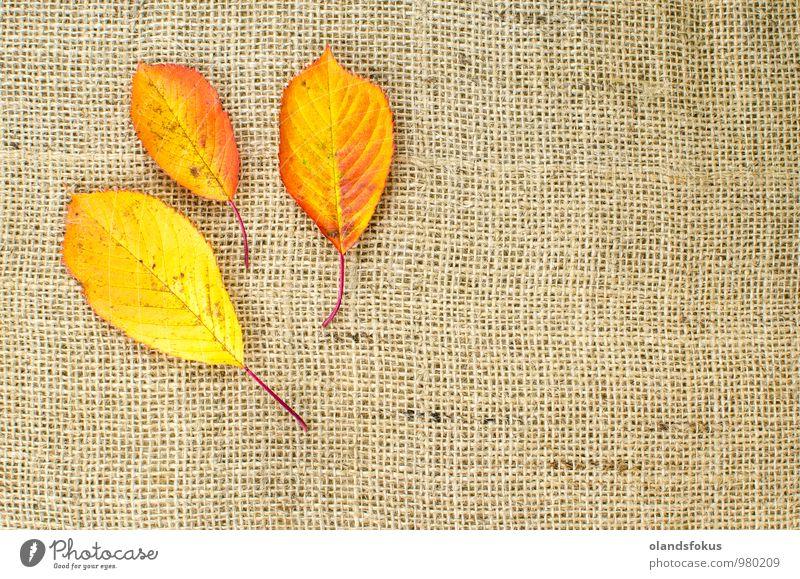 Herbstfarbene Blätter an der Sackgasse Design Natur Pflanze Baum Blatt Nutzpflanze Dekoration & Verzierung braun gelb rot Farbe Hintergrund Haufen Sackleinen