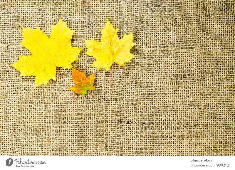 Bunte Ahornblätter Design schön Natur Pflanze Herbst Baum Blatt braun gelb rot Farbe Hintergrund Haufen Sackleinen Leinwand farbenfroh Dekor Gewebe fallen Sehne
