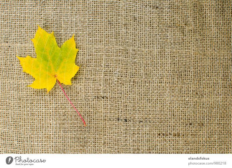 Einfaches Ahornblatt Design schön Natur Pflanze Herbst Baum Blatt braun gelb rot Farbe Hintergrund Sackleinen Leinwand farbenfroh Dekor Gewebe fallen Jute
