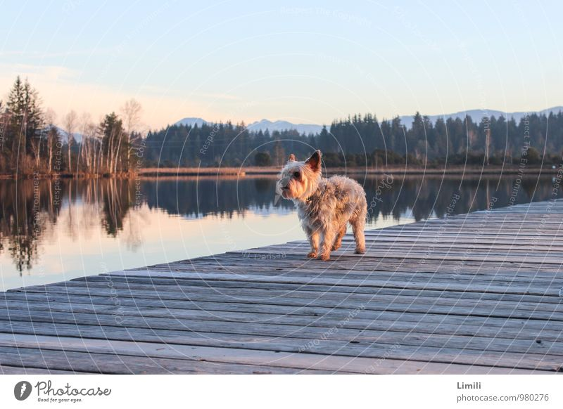 Hunde-Laufsteg Hund Natur Ferien & Urlaub & Reisen Wasser Erholung Landschaft Tier Umwelt Herbst Küste Holz Schwimmen & Baden See Horizont Freizeit & Hobby Zufriedenheit