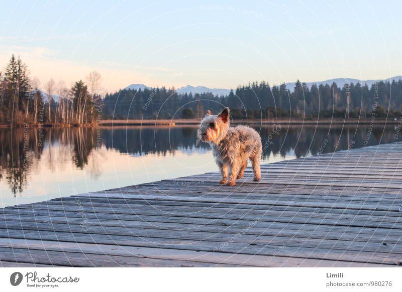 Hunde-Laufsteg Wohlgefühl Zufriedenheit Erholung Schwimmen & Baden Freizeit & Hobby Ferien & Urlaub & Reisen Ausflug Natur Landschaft Wasser Horizont Herbst