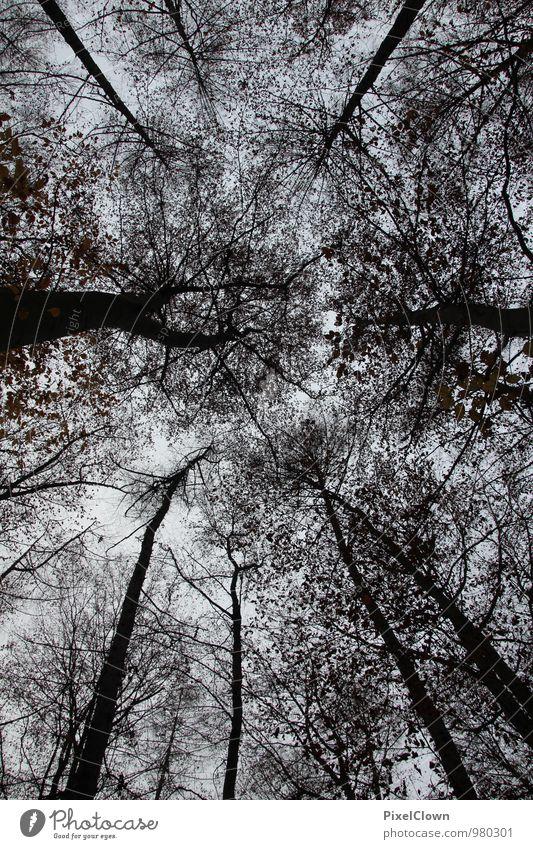 Endzeitstimmung Himmel Natur Ferien & Urlaub & Reisen Pflanze weiß Baum Einsamkeit Blatt Landschaft Tier schwarz dunkel Wald Umwelt Traurigkeit Gefühle