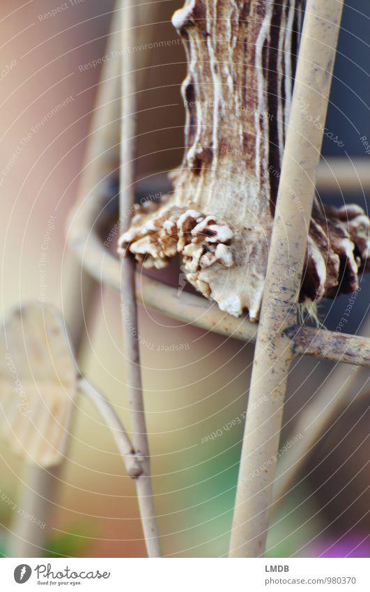 Fundstück Hirsche braun Horn Krickerl Dekoration & Verzierung herbstlich Herbstfärbung Oberflächenstruktur Unschärfe beige Wildtier Trophäe Jagd Farbfoto
