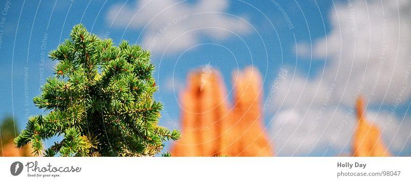 Grün - orange - blau - weiß Baum Nadelbaum Tanne Utah Nationalpark 2006 Sommer Wolken USA Spitze Bryce Canyon Himmel Felsen Felsspitze Tannennadel