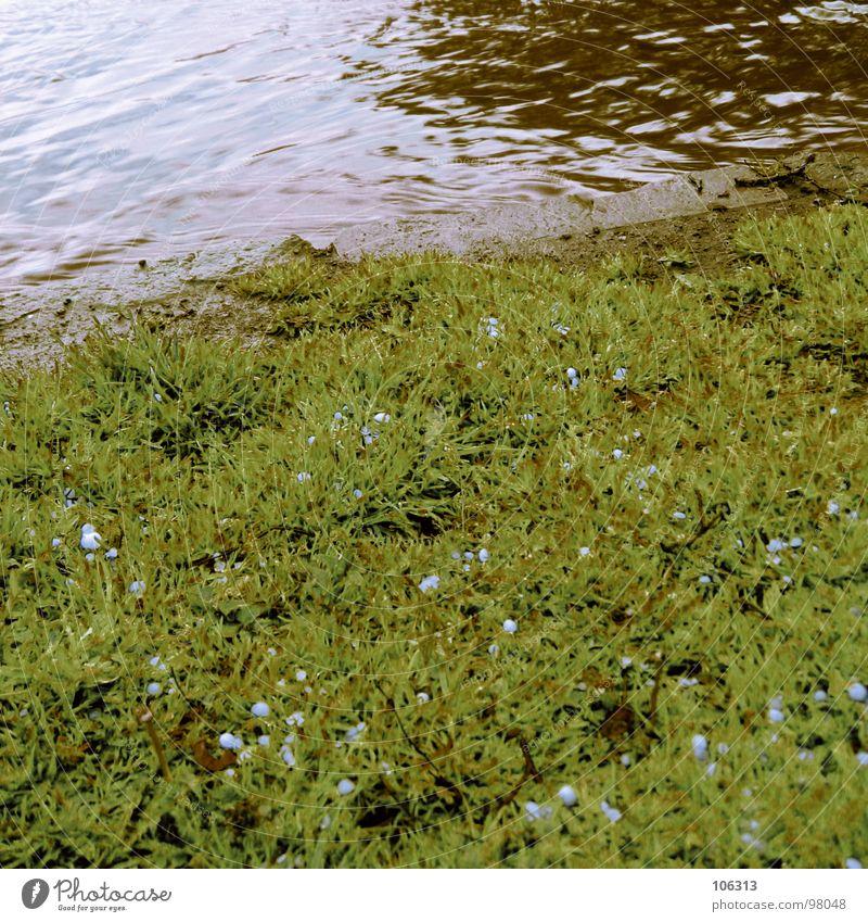 LANDSCHAFTSARCHITEKTUR Natur Wasser grün rot Wiese Regen braun Elektrizität Fluss Rasen Dresden Korn Bach Illusion Gewässer Fälschung