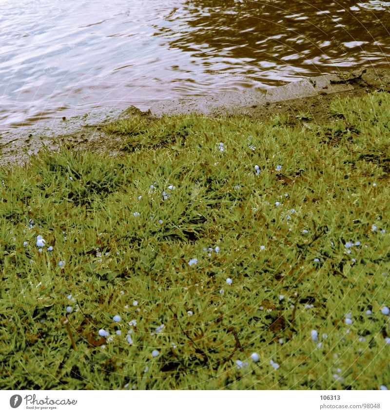 LANDSCHAFTSARCHITEKTUR Wiese Korn Bach Gewässer Elektrizität Fälschung grün organisch braun rot Fluss Dresden Rasen Hagel hagelkörner Regen Illusion Schatten