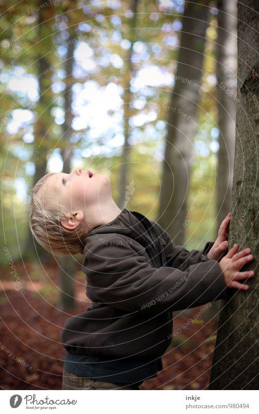 riesengroß Mensch Kind Natur Baum Wald Leben Herbst Junge oben Freizeit & Hobby Kindheit wandern Ausflug Spaziergang Neugier