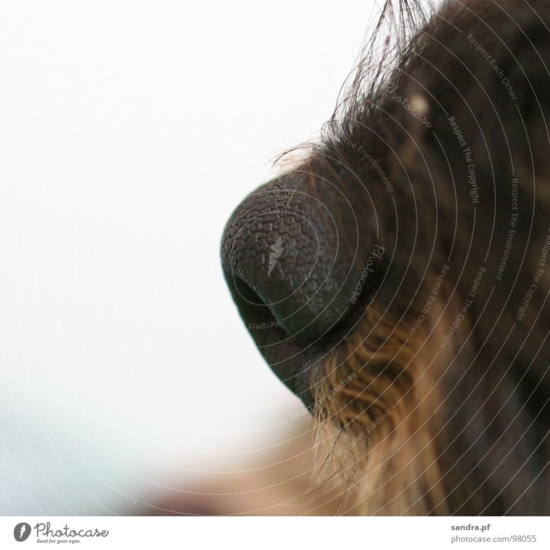 *schnüff* weiß schwarz Haare & Frisuren Hund Luft braun nass Nase feucht Dienstleistungsgewerbe Bart atmen Säugetier beige Nasenloch Dackel