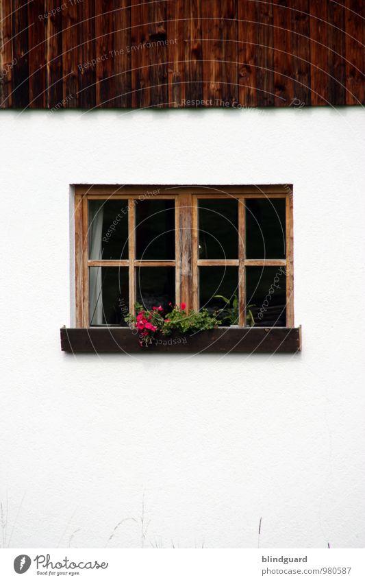 Steamy Windows grün weiß rot Haus schwarz Fenster Berge u. Gebirge Wand Gebäude Mauer Holz Stein braun Dekoration & Verzierung Tourismus Glas