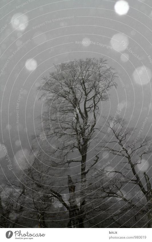 Wasserzeichen | herunterfallend, kreisförmig, jetzt wegbleibend Baum Winter dunkel Wald kalt Traurigkeit Schnee Tod Schneefall Eis gefährlich Zukunft Klima