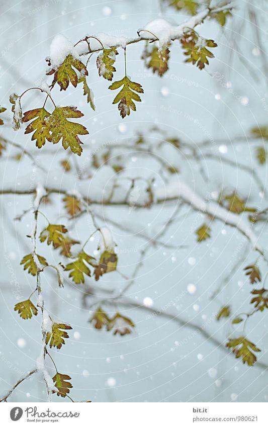 außergewöhnlich | Herbstschnee Natur Baum Blatt ruhig Winter Wald kalt Umwelt Schnee Lifestyle Feste & Feiern Stimmung Schneefall träumen Zufriedenheit Eis