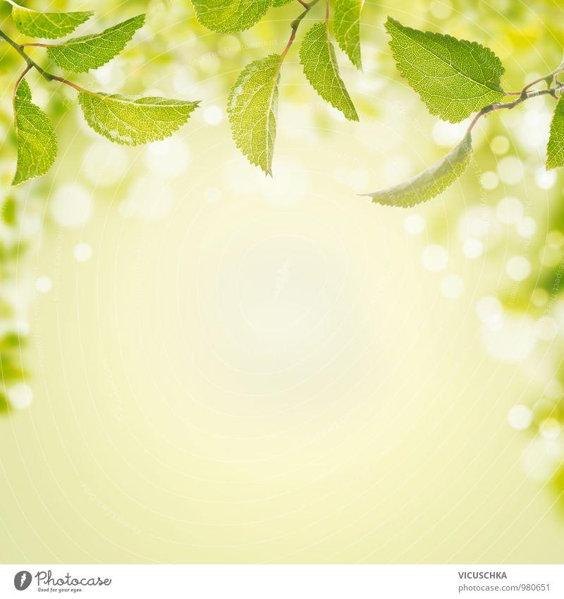 Frühling Hintergrund mit grünen Blättern und Bokeh Natur Pflanze grün Sommer Sonne Blatt Wald Frühling Stil Hintergrundbild Garten Park Luft Design Schönes Wetter Zeichen