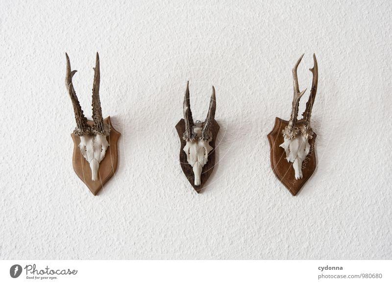 Wilde Dekoration auf Raufasertapete Lifestyle Stil Design exotisch Jagd Dekoration & Verzierung Raum Mauer Wand Wildtier Totes Tier 3 Tiergruppe ästhetisch