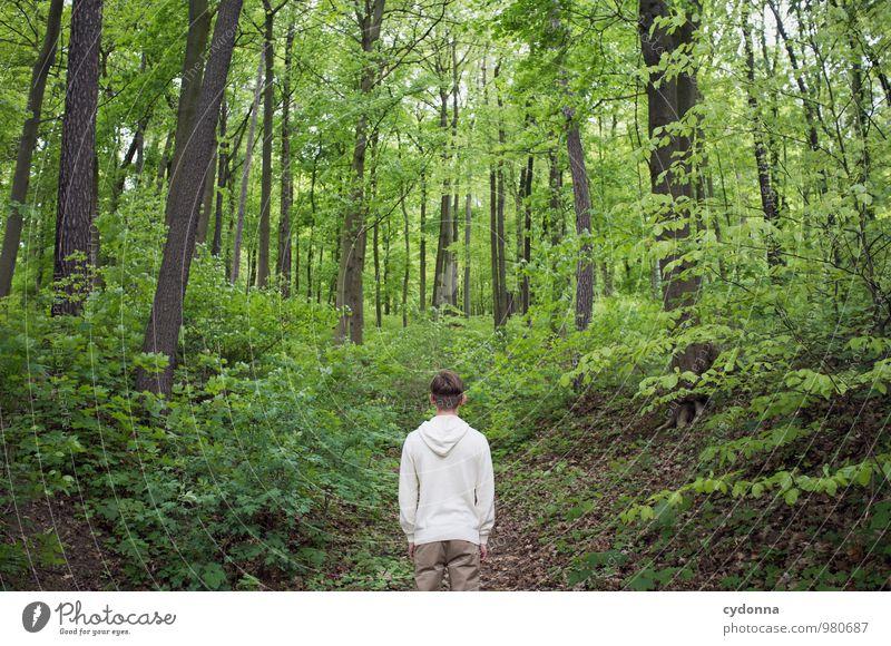 Mittendrin. Mensch Natur Jugendliche Baum Erholung Landschaft ruhig Junger Mann 18-30 Jahre Wald Umwelt Erwachsene Leben Wege & Pfade Frühling Freiheit