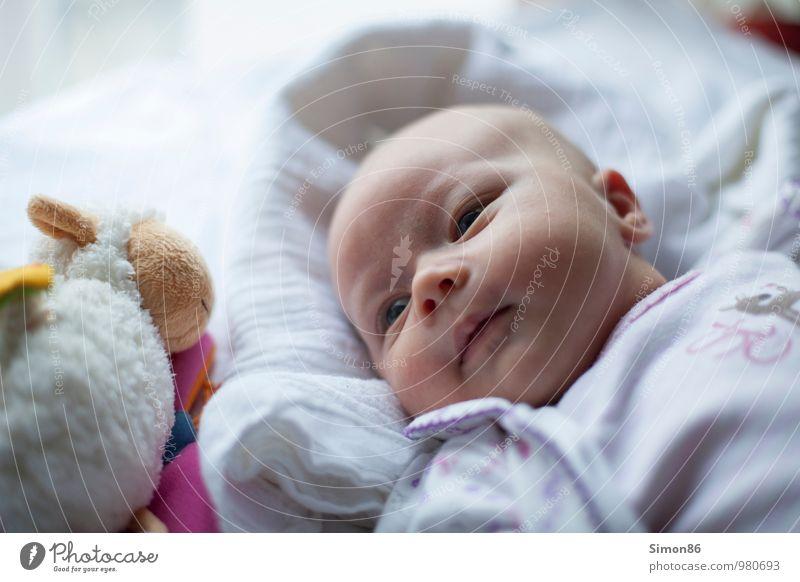 Ich und mein Schaf Mensch feminin Baby Kleinkind 1 0-12 Monate Stofftiere liegen Blick ästhetisch schön Neugier niedlich weiß Freude Glück Fröhlichkeit