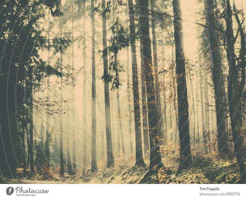 Ein Waldmärchen Waldlichtung Waldspaziergang geheimnisvoll Baum Baumstamm Verhext Märchen fantastisch Gegenlicht Märchenwald Taunus Spaziergang Romantik