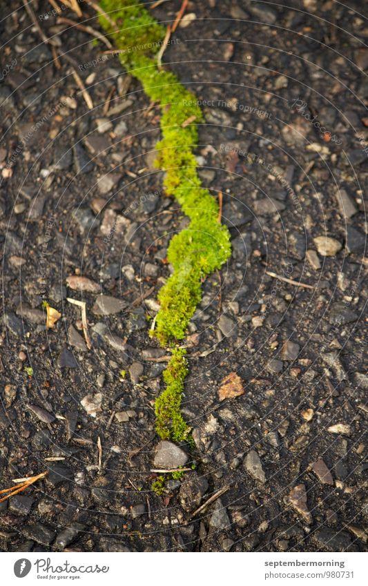 Bahn gebrochen Natur Moos Stein dünn frisch Stadt grau grün Außenaufnahme Menschenleer