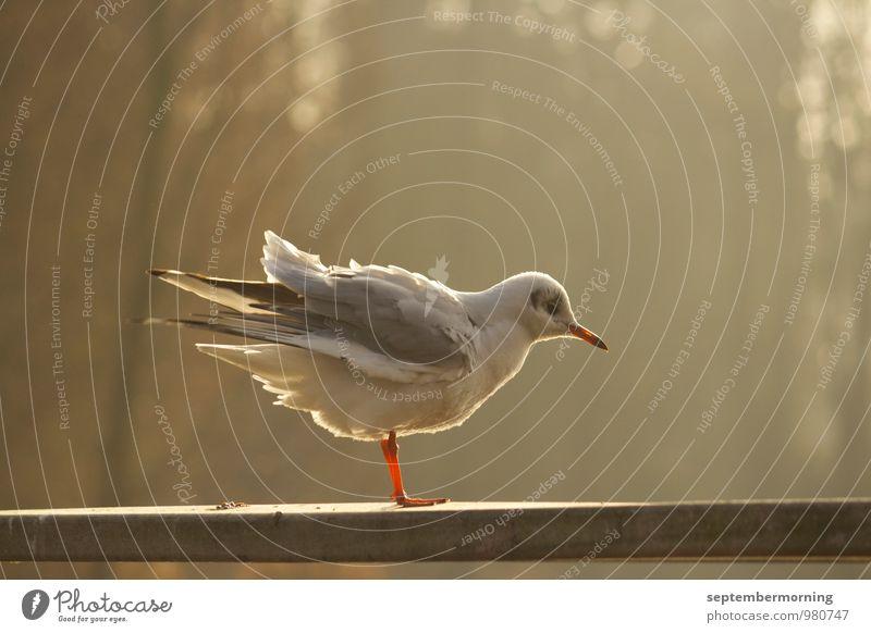Im Gegenlicht Herbst Vogel 1 Tier stehen braun weiß Außenaufnahme Menschenleer Sonnenlicht Schwache Tiefenschärfe Tierporträt