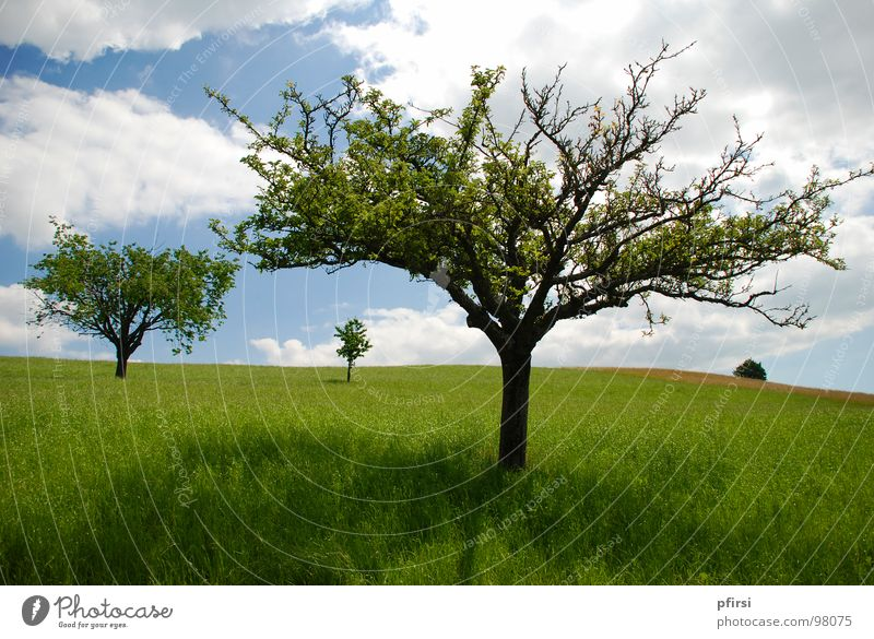 Familie Baum Natur Himmel Sonne grün blau Sommer Wolken Wiese Gras Frühling Wärme hell Feld Fröhlichkeit Physik