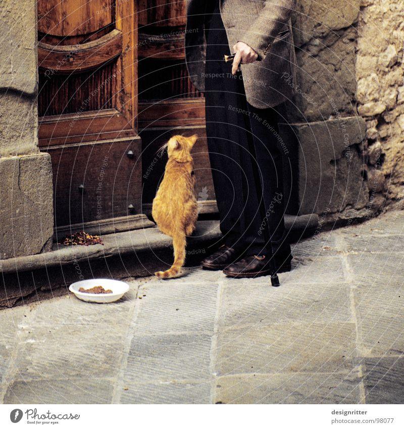 zweisam Leben Häusliches Leben Wohnung Mensch Freundschaft Senior Katze Liebe Zusammensein Vertrauen Sicherheit Geborgenheit Einigkeit loyal Sympathie Tierliebe