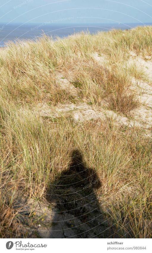 !Trash! Belgisches Strandgut Mensch 1 Natur Landschaft Pflanze Schönes Wetter Gras Küste Meer blau Sandstrand Düne Dünengras Schatten Schattenspiel