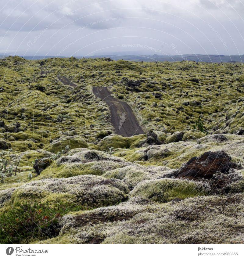 ISLAND / Land der Trolle & Elfen Umwelt Natur Landschaft Pflanze Himmel Klima Klimawandel Moos Moosteppich Flechten Hügel Felsen ästhetisch authentisch schön