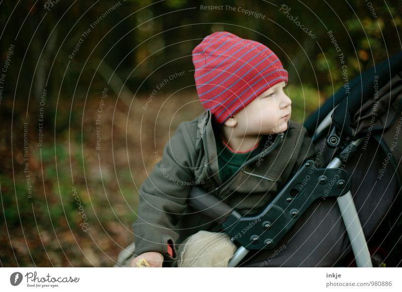 Spazierfahrt Mensch Kind Natur Winter Wald Leben Herbst Gefühle Junge Park Lifestyle Freizeit & Hobby sitzen Kindheit Ausflug beobachten