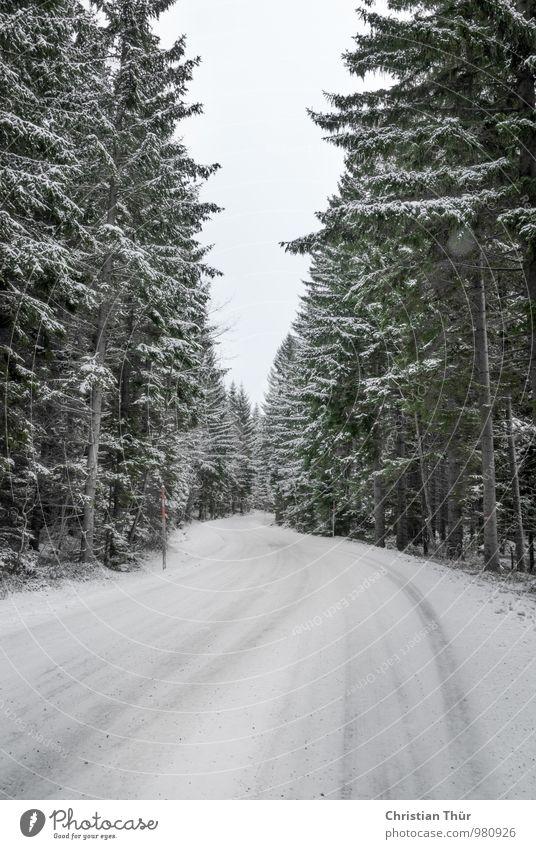 Winter in den Bergen harmonisch Zufriedenheit Sinnesorgane Erholung Schnee Berge u. Gebirge wandern Umwelt Natur Wolkenloser Himmel Eis Frost Baum Tannen Wald