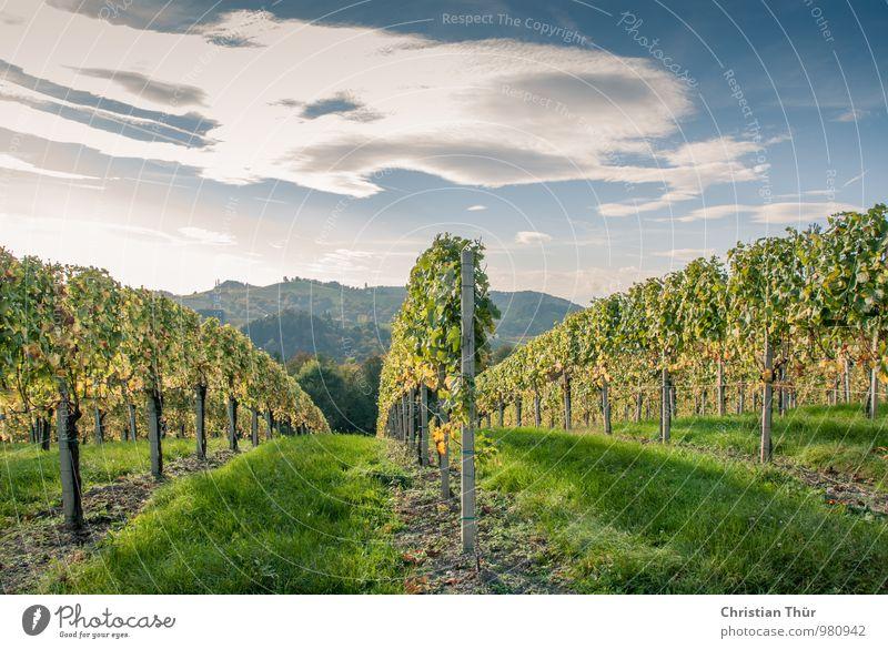 Weinlese / Spätherbst Himmel Natur Ferien & Urlaub & Reisen Pflanze Erholung Landschaft ruhig Wolken Ferne Umwelt Leben Herbst Wiese Freiheit außergewöhnlich