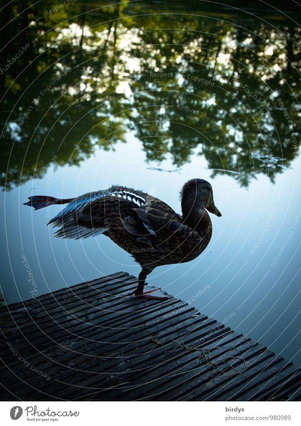 Yoga am Morgen Himmel Natur Wasser Sommer Baum Tier Bewegung lustig außergewöhnlich See Idylle elegant Zufriedenheit Wildtier stehen ästhetisch