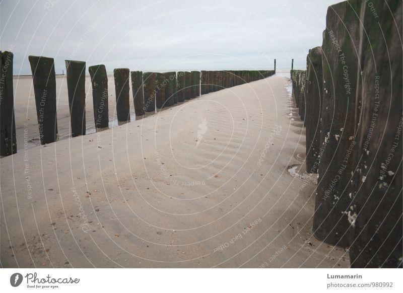 reihenweise Natur Ferien & Urlaub & Reisen alt schön Erholung Meer Landschaft Strand kalt Umwelt Herbst natürlich Horizont trist stehen einfach