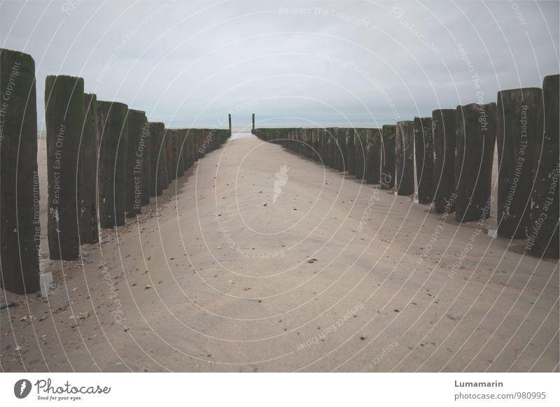 entgegen Umwelt Landschaft Himmel Horizont Herbst schlechtes Wetter Strand Nordsee Buhne kalt lang natürlich Stimmung Einsamkeit nachhaltig Schutz Ferne