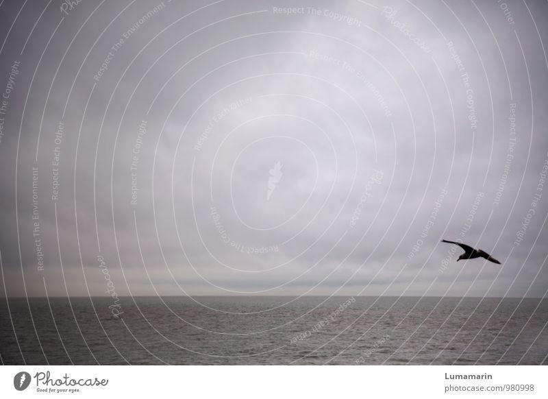 Solotrip Landschaft Himmel Wolken Horizont schlechtes Wetter Nordsee Tier Vogel Möwe 1 fliegen Ferien & Urlaub & Reisen frei Unendlichkeit kalt rebellisch blau