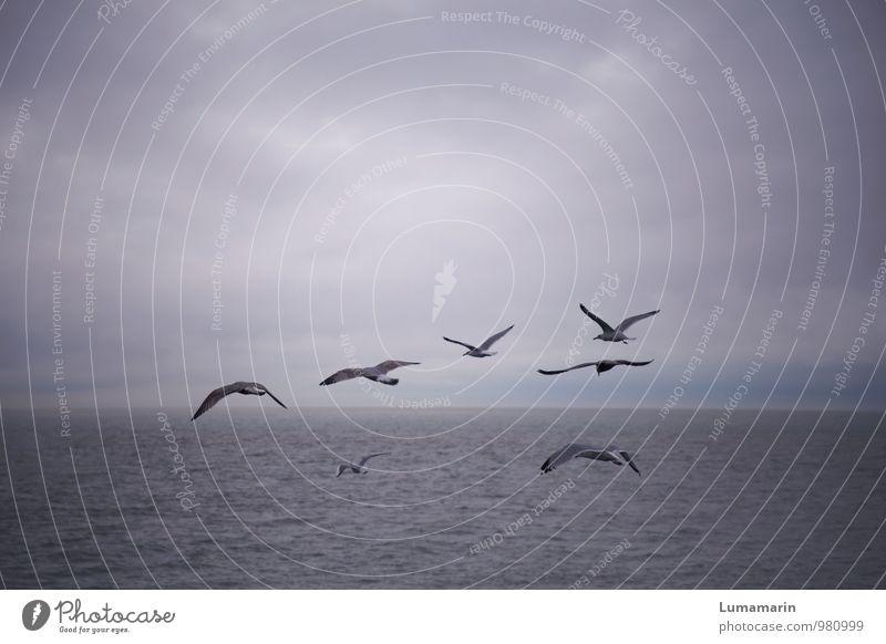 Gruppenreise Landschaft Himmel Wolken Horizont schlechtes Wetter Nordsee Tier Vogel Möwe Tiergruppe Schwarm fliegen Ferien & Urlaub & Reisen frei Unendlichkeit