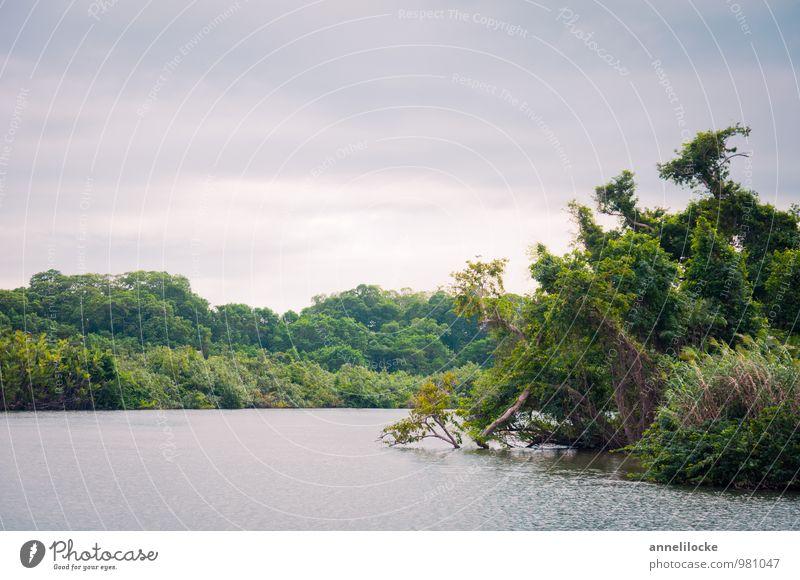 Sittee River Ferien & Urlaub & Reisen Tourismus Abenteuer Ferne Umwelt Natur Landschaft Pflanze Wasser Sommer Mangrove Wald Urwald Flussufer Lagune grün bedeckt