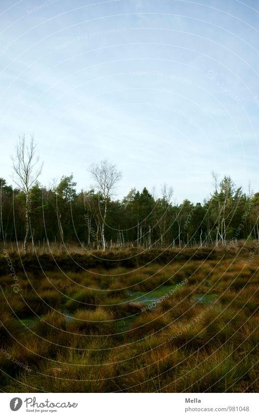 More Moor Umwelt Natur Landschaft Pflanze Baum Gras Wald Sumpf natürlich trist Einsamkeit ruhig Farbfoto Gedeckte Farben Außenaufnahme Menschenleer