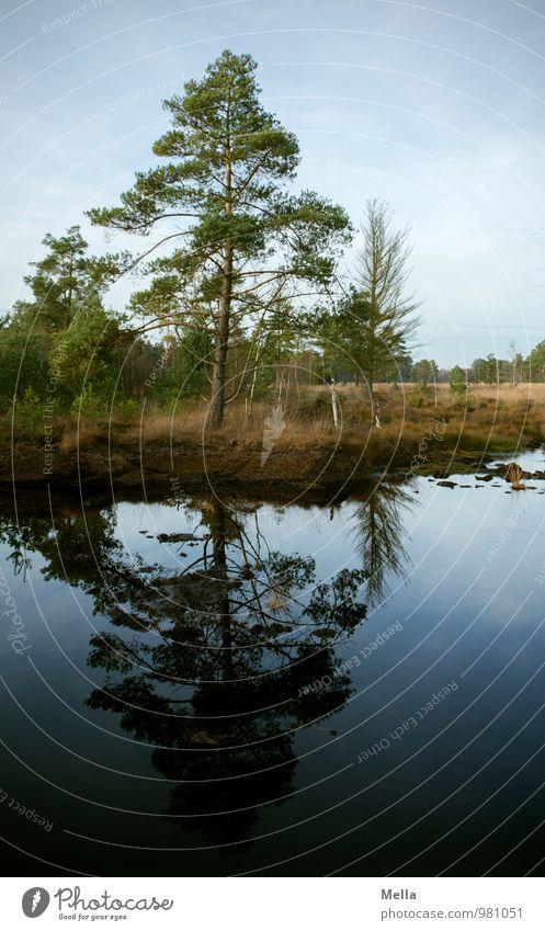Reflexion - Auf ein gutes Neues Umwelt Natur Landschaft Pflanze Wasser Baum Moor Sumpf Teich See Wachstum natürlich blau Idylle ruhig Spiegelbild