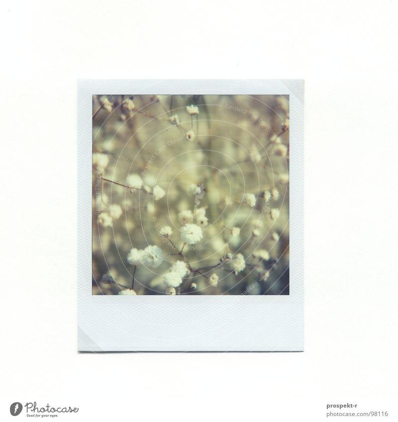 Blumenmeer Polaroid weiß grau Schleier Unschärfe Griechenland Chalkidiki grün Makroaufnahme Nahaufnahme blau Natur Rahmen