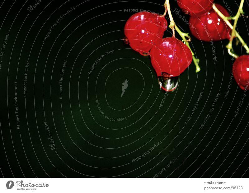 Beerentropfen rot grün Sträucher schwarz lecker Ernährung Pflanze fruchtig Vitamin Frucht Gesundheit red berry Wassertropfen Regen rain Appetit & Hunger Natur